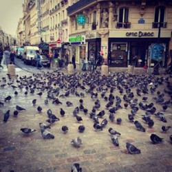 Pigeons in the middle of Paris