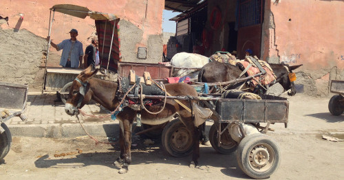 Marrakech, Morocco Donkey Carriage