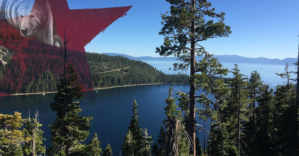 California Dreamin' In SF & Tahoe